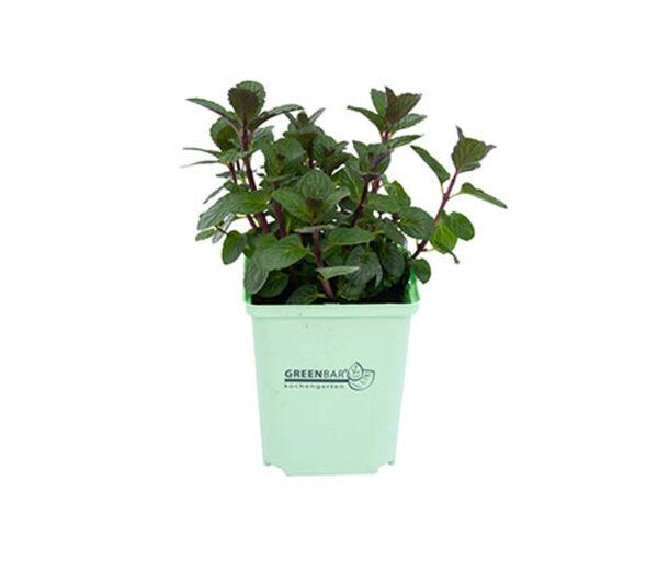 Greenbar »Teekräuter«