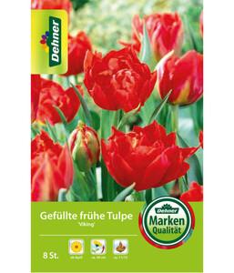 Dehner Blumenzwiebel Gefüllte frühe Tulpe 'Viking'