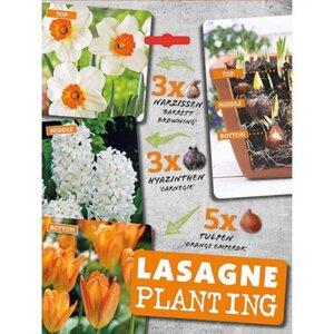 """Blumenzwiebeln """"Lasagne Orange"""" Mehrfarbig"""
