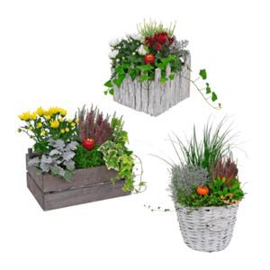 GARDEN FEELINGS     Bepflanztes Holzgefäß / bepflanzter Korb