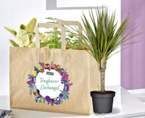 GARDENLINE®  Pflanzentüte mit 3 Pflanzen