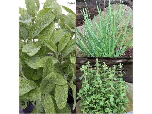 Küchenkräuter-Kollektion, je 1 Pflanze Oregano, Schnittknoblauch, Salbei