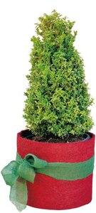 Pflanzen-Winterschutz