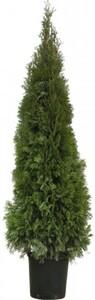 Lebensbaum Smaragd 100-120 cm hoch ,  7,5 l Container