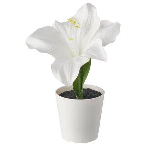 VINTERFEST                                Topfpflanze, künstlich/mit Topf, Amaryllis weiß, 6 cm