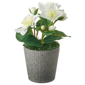 VINTERFEST                                Topfpflanze, künstlich/mit Topf, Christrose weiß, 10 cm