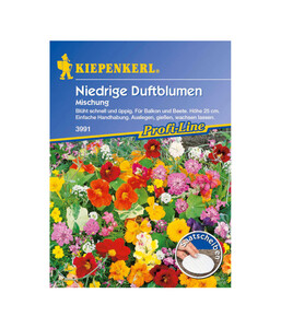 Niedrige Duftblumen Mix, Saatgut von Kiepenkerl