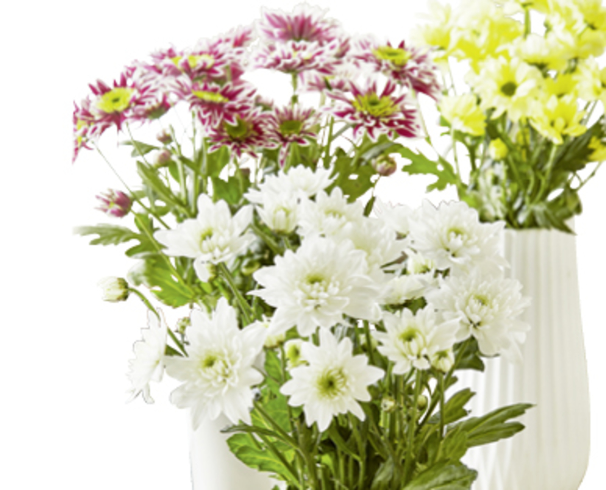 Bild 1 von Schnittblumen, langstielig