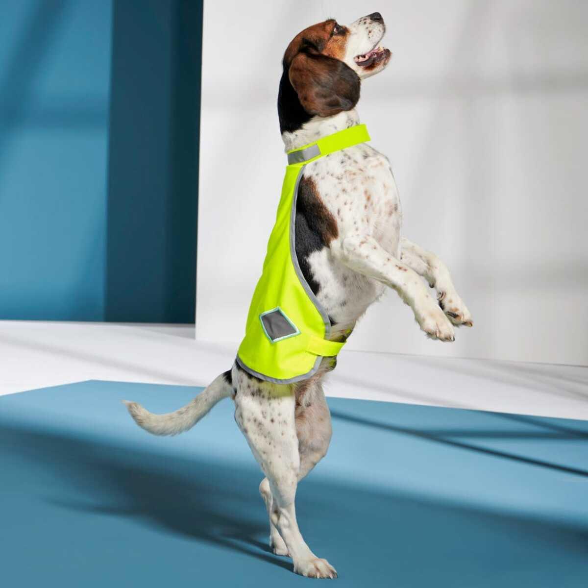 Bild 1 von Hundemantel mit Reflektoren
