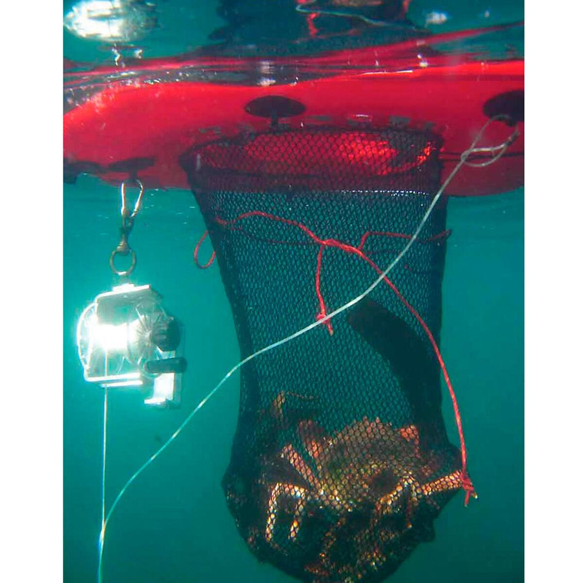 Bild 3 von Aufblasbare Boje Board mit integriertem Netzsack Dive Net