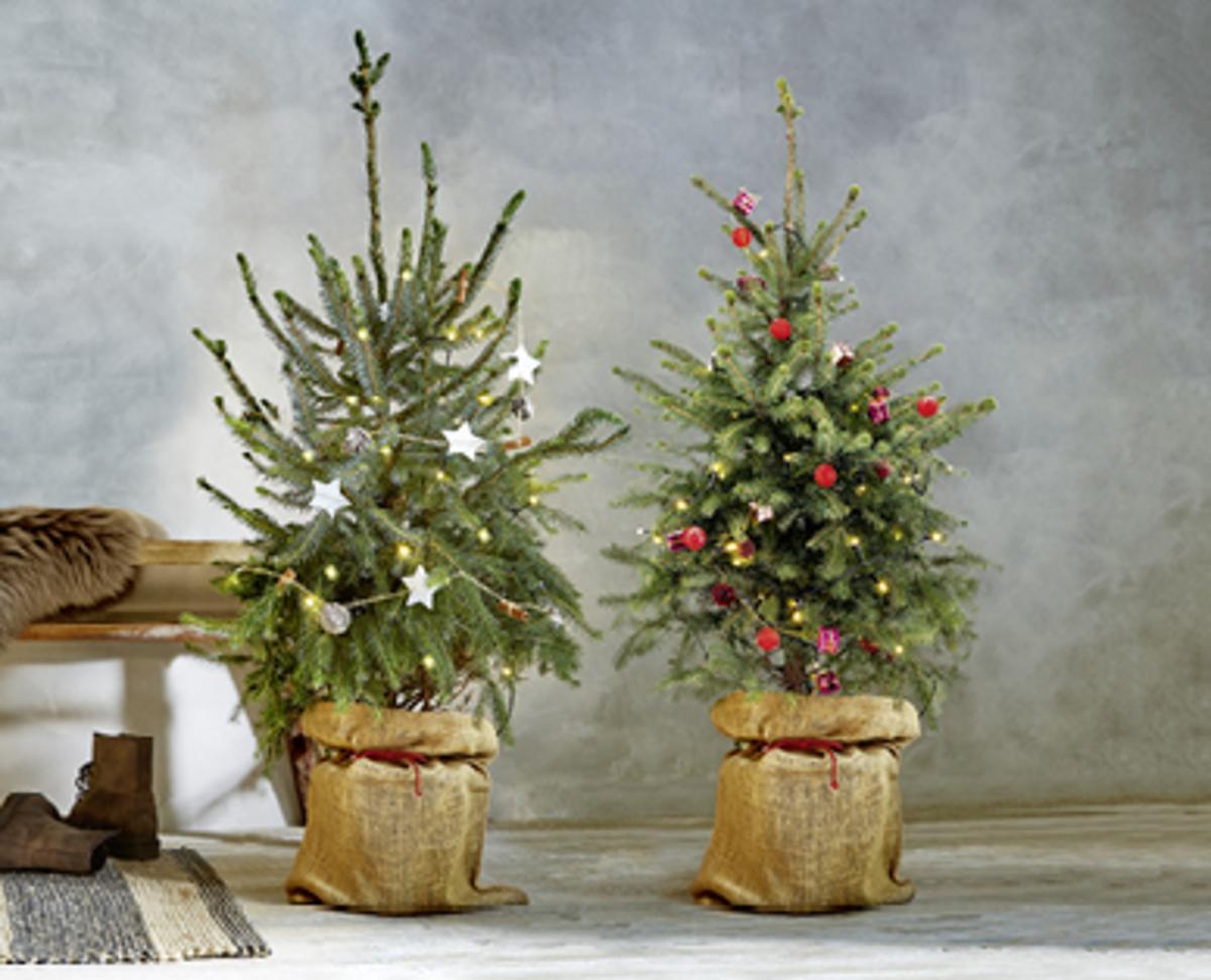 Bild 4 von GARDENLINE®  Dekorierter Weihnachtsbaum