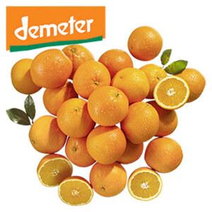 DEMETER Spanien/Italien Orangen, Kennzeichnung siehe Etikett, jedes 1-kg-Netz