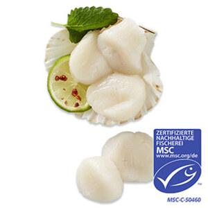Kammmuschelfleisch aus MSC-zertifiziertem Wildfang, Nordwestatlantik, getaut, je 100 g