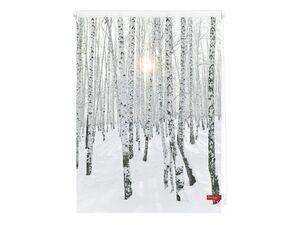 Lichtblick Klemmfix Rollo »Birkenwald«, Sicht- und Blendschutz, lichtdurchlässig, klemmbar