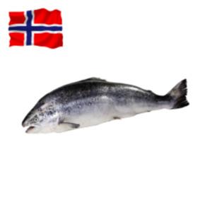 Frischer Norweger Lachs