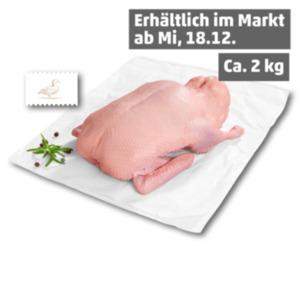 Junge deutsche Ente
