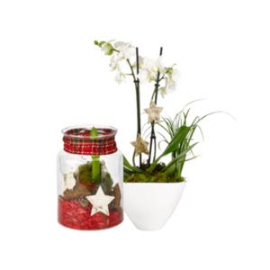Weihnachtliche Orchideenschale