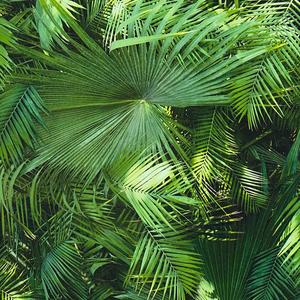 A.S. Creation NEUE BUDE 2.0 Vliestapete - grün - Blätter - 10 Meter