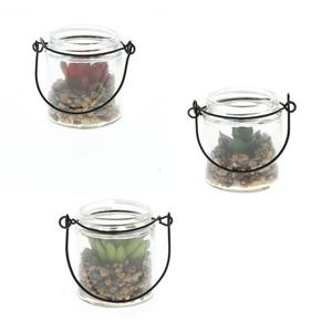 ProVida Sukkulente im Glas 11 cm in verschiedenen Farben