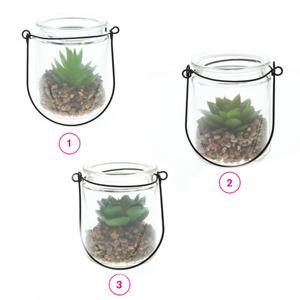 ProVida Sukkulente im Glas 18 cm in verschiedenen Varianten