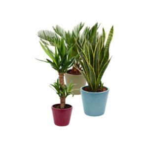 Hochwertiger Grünpflanzen-Mix
