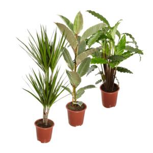 GARDEN FEELINGS     Grünpflanze
