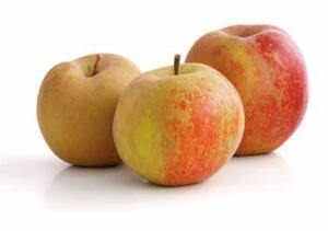 Niederlande Tafeläpfel