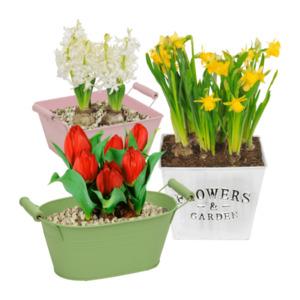 GARDEN FEELINGS     Blumenzwiebeln im Gefäß