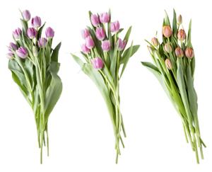 Tulpen-Sortiment