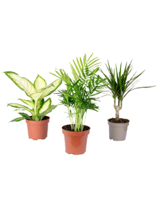 Pflanzenset, max. Wuchshöhe: 120 cm, mehrjährig