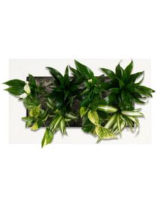 Flowerwall Pflanzenbild »Flowerwall« , max. Wuchshöhe: 40  cm, mehrjährig