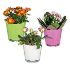 Mini Pflanze