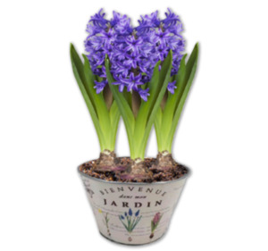 Frühlingshaft bepflanzte Gefäße