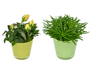GARDENLINE®  Mini-Pflanze im Glastopf