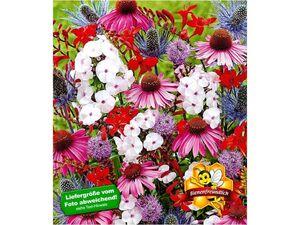 Staudenbeet Bienen-Paradies,10 Stück