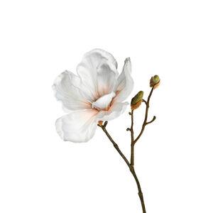 Stielblume Magnolie, L:30cm, hellblau