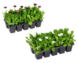 GARDENLINE®  Beetpflanzen Frühlingsmix, 10er-Tray