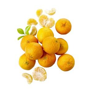 """Spanien Mandarinen """"Nadorcott"""", Kennzeichnung siehe Etikett, jedes 1,25-kg-Netz"""