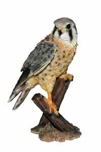 Casa Collection - Falke auf Baumstumpf sitzend