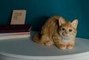 Bild 1 von My Flair Katze, orange/weiß gestreift