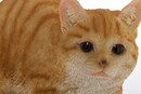 Bild 4 von My Flair Katze, orange/weiß gestreift