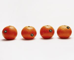 Premium Mandarinen, lose