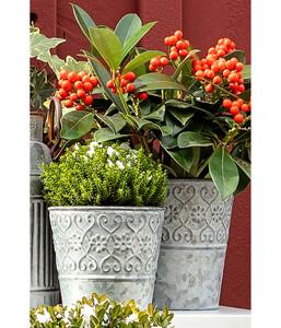 Dehner Zinktopf Ornamente