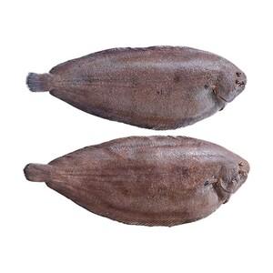 Seezunge ausgenommen mit Kopf, Wildfang, Nordostatlantik, je 100 g