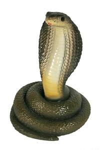Casa Collection - Kobra
