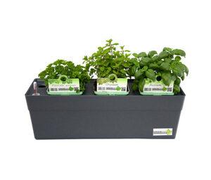 Greenbar »Küchenkräuter«