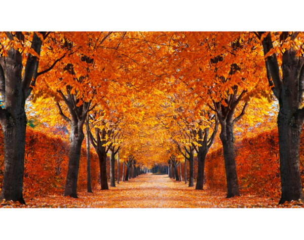 Fototapete Baumallee im Herbst