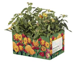 GARDENLINE®  Balkon-/Kübelpflanzen, 6er -Tray