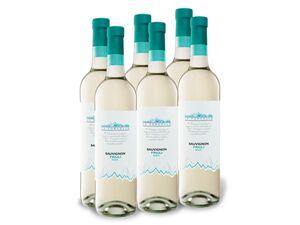 6 x 0,75-l-Flasche Weinpaket Le Forcelle Sauvignon Friuli DOC trocken, Weißwein