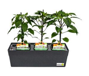 Greenbar »Snackpaprika«